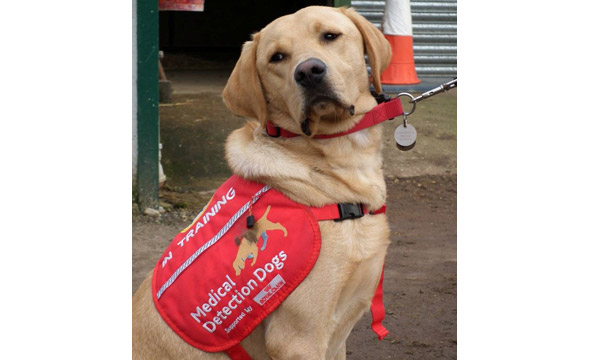 Medical-Detection-Dogs-Charity-Day